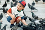 Save The Trafalgar Square Pigeons